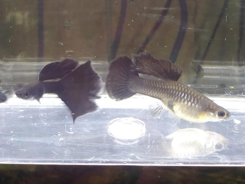 Gallery – Kim's Fish